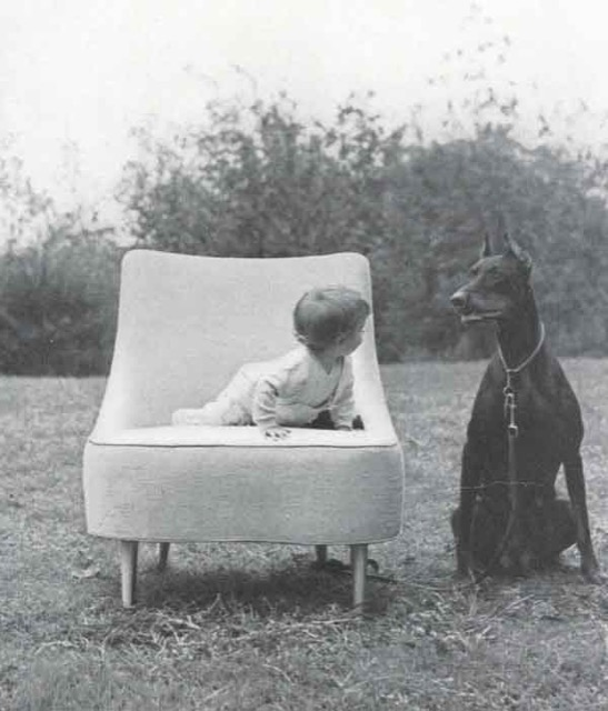 A baby looks to a Doberman in the Dunbar Tear Drop chair