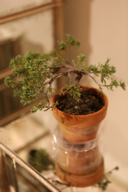 Bonsai in Currey and Company showroom